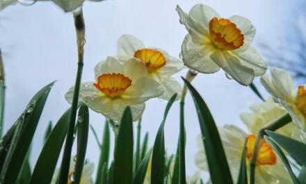 Sådan får du haven klar til foråret