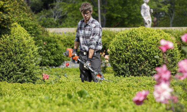 Vælg den flotteste ligusterhæk til din have